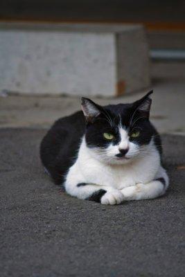 就活生を見つめる猫
