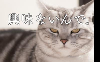 就活に興味がない猫